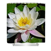 Water Lily Blossom Shower Curtain