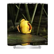 Water Lily Bud Shower Curtain