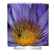 water lily from Madagascar Shower Curtain