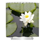 Water Lily I I Shower Curtain