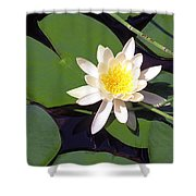Water Lily I I I Shower Curtain