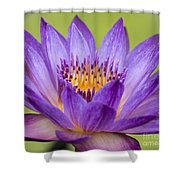 Water Lily Lindsey Woods Macro Shower Curtain