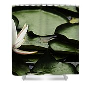 Water Lily Pad Shower Curtain