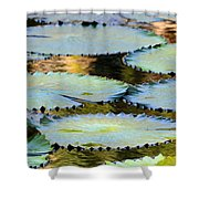 Water Lily Pads In The Morning Light Shower Curtain