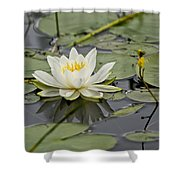 Water Lily Pictures 45 Shower Curtain
