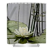 Water Lily Pictures 48 Shower Curtain