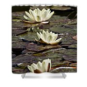 Water Lily Pictures 64 Shower Curtain
