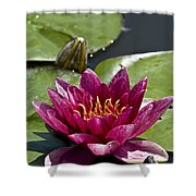 Water Lily Pictures 66 Shower Curtain