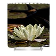 Water Lily Pictures 67 Shower Curtain