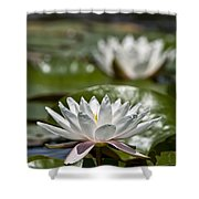 Water Lily Pictures 70 Shower Curtain