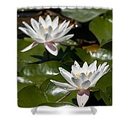 Water Lily Pictures 75 Shower Curtain