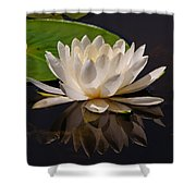 Water Lily Pictures 81 Shower Curtain