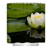 Water Lily Reflection II Shower Curtain