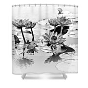 Water Lily Study - Bw Shower Curtain