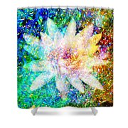Water Lily With Iridescent Water Drops Shower Curtain