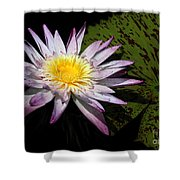 Water Lily With Lots Of Petals Shower Curtain