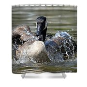 Water Logged - Canadian Goose Shower Curtain