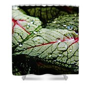 Water On The Leaves Shower Curtain
