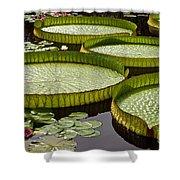 Water Platter Charm Shower Curtain