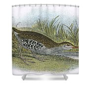 Water Rail Shower Curtain