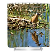 Water Rail Reflection Shower Curtain
