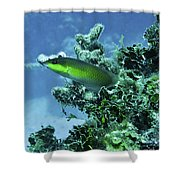 Water World Three Shower Curtain