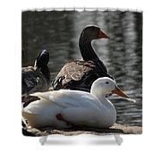 Waterbirds Shower Curtain