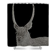 Waterbuck B W Abstract Shower Curtain