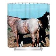 Watercolor Mustangs Shower Curtain