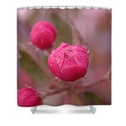 Waterdrops Before Blooming Shower Curtain