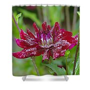 Waterdrops On Petals  Shower Curtain