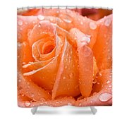 Watered Rose Shower Curtain