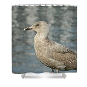 Waterfront Seagull  Shower Curtain