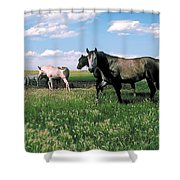Watering Hole 2 Shower Curtain