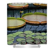Waterlilies And Platters 2 Shower Curtain by Byron Varvarigos
