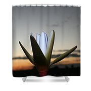 Waterlilly 3 Shower Curtain