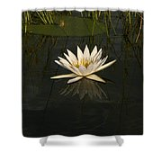 Waterlilly 5 Shower Curtain