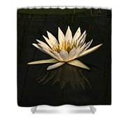 Waterlilly 6 Shower Curtain