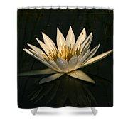 Waterlilly 7 Shower Curtain