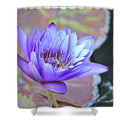 Waterlily And Bee Shower Curtain