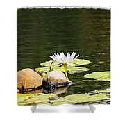 Waterlily And Coconuts Shower Curtain