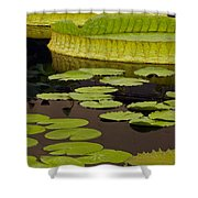 Waterlily Charm Shower Curtain