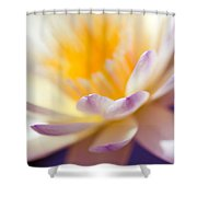 Waterlily Dreams 11 Shower Curtain