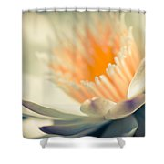 Waterlily Dreams 7 Shower Curtain