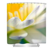Waterlily Dreams 9 Shower Curtain