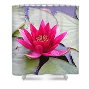 Waterlily In A Pond Shower Curtain