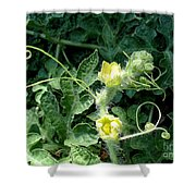 Watermelon Flowers And Vine Shower Curtain