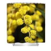 Wattle Flowers Australian Native Shower Curtain