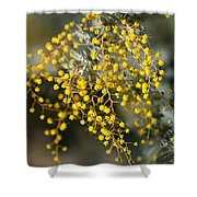Wattle Flowers Shower Curtain