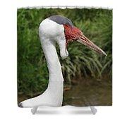 Wattled Crane Shower Curtain